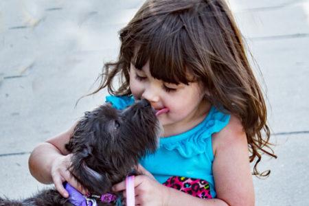 犬が飼い主の口や顔をなめる理由