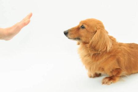 しつけで犬がなめる行動をやめさせる方法
