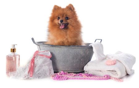 犬のシャンプーの準備