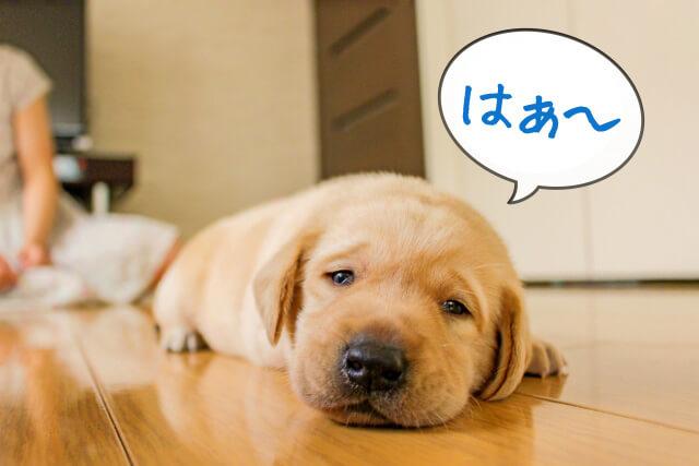 犬がため息をつく意味や理由