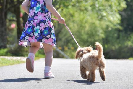 犬の散歩の距離と時間