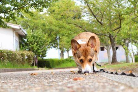 においを嗅ぐ犬のカーミングシグナル