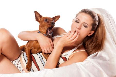 犬があくび人間のがうつる