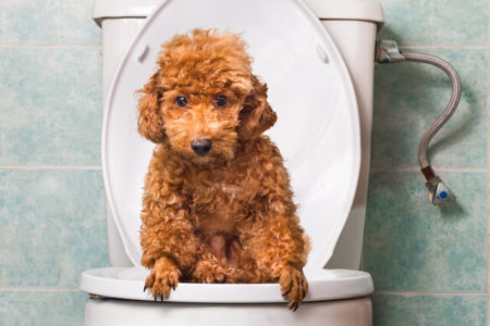 下痢しやすい犬