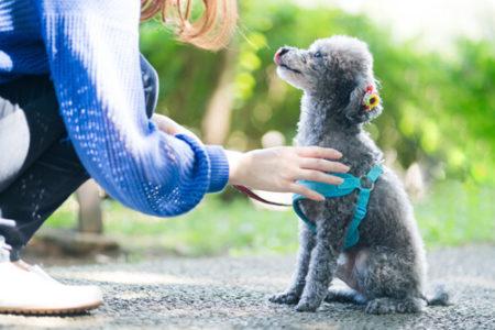 犬と飼い主の主従関係