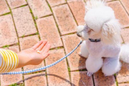 犬が唸るのをやめさせる手からおやつ