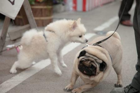 犬のカーミングシグナル背をむける