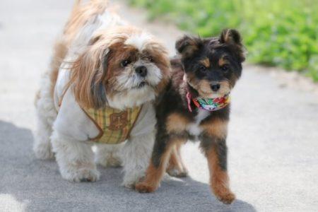 花粉症になりやすい犬の種類