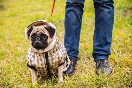 犬の花粉症は散歩時服を着る
