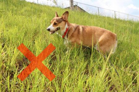 犬の花粉症は散歩時草むらに入らない