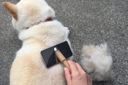 犬の花粉症は散歩が終わったら花粉をおとす