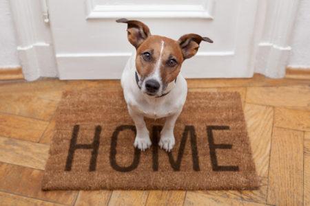 犬の花粉症対策グッズ静電気除去マット