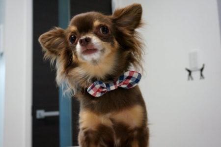 犬の花粉症対策グッズ静電気除去アクセサリー