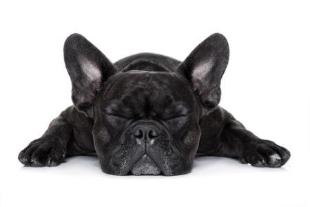 犬のくしゃみのカーミングシグナル