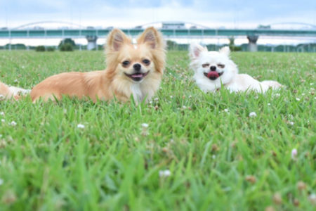 犬が笑う表情