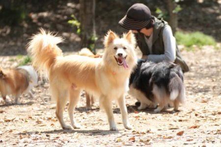 パンティング中の笑いは犬をいやす
