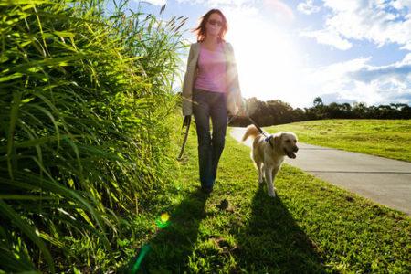 犬の散歩リーダーウォーク
