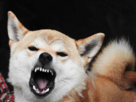 犬が笑う理由ストレス