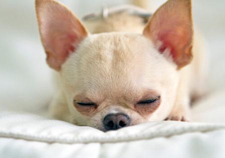 犬のいびきはかわいいうるさい