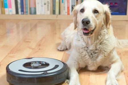 犬のいびきの原因空気がよごれている