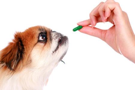 犬が薬を飲んでいる時はグレープフルーツを与えない