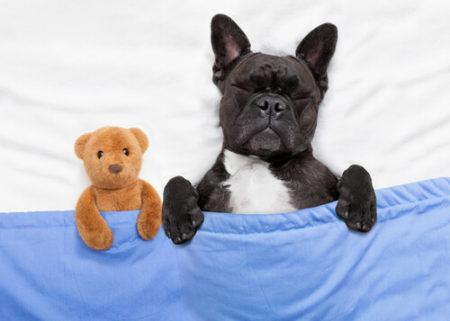 犬の寝言にしつけや対策は必要か