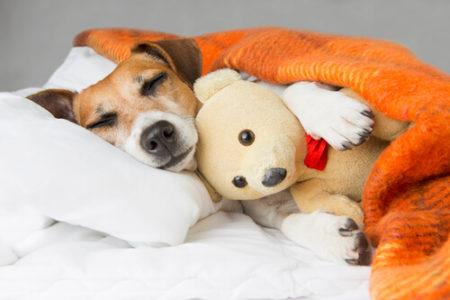 犬が寝言を言う理由