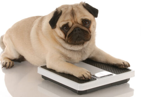 犬がメロンで肥満