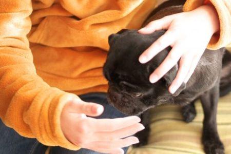 犬のトイレトレーニングほめるタイミング