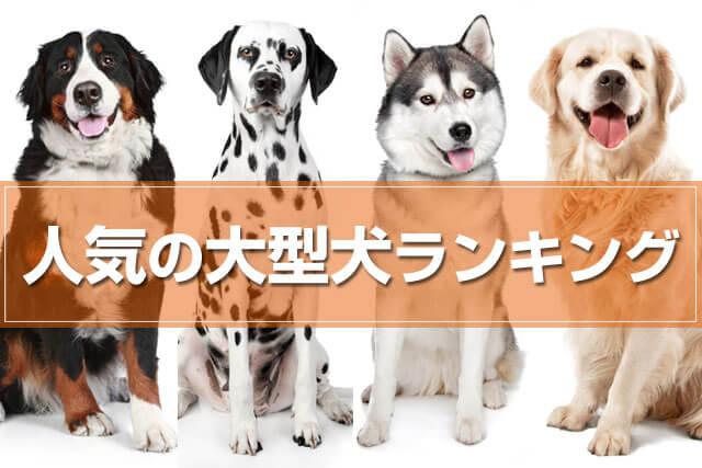 大型犬ランキング