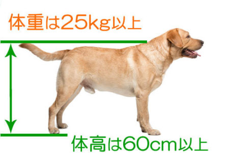 大型犬の基準体重