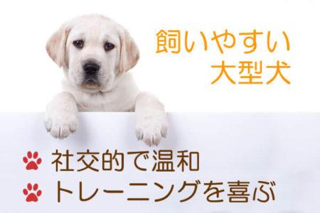 飼いやすい大型犬の種類の特徴