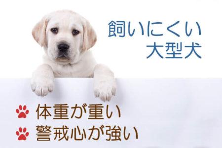 飼いにくい大型犬の種類の特徴