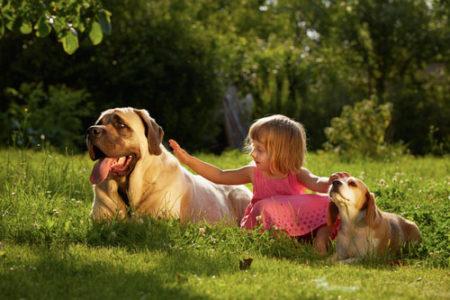大型犬を飼うために必要な心構え