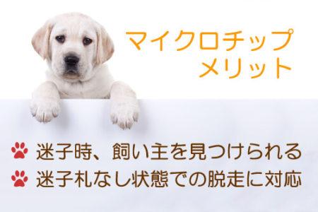 マイクロチップを犬につけるメリット