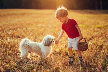 犬の散歩夏の時間帯