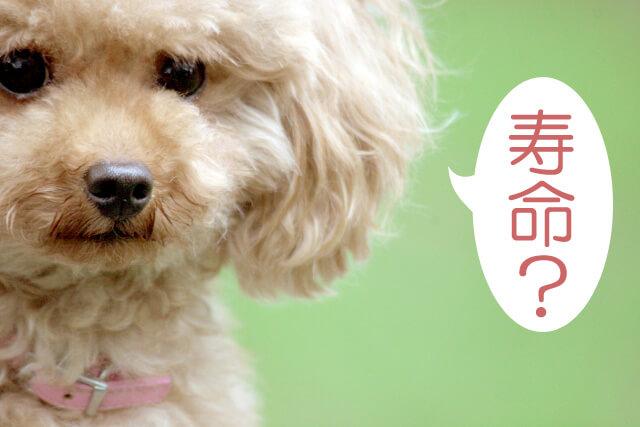 犬の寿命といちご