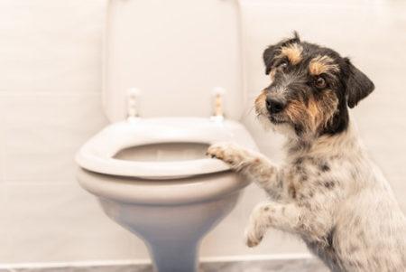 犬がさつまいもで下痢