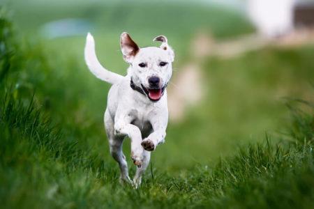 犬のしっぽでバランスをとる