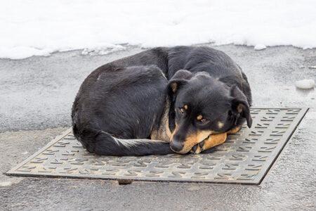 犬のしっぽで体温調節