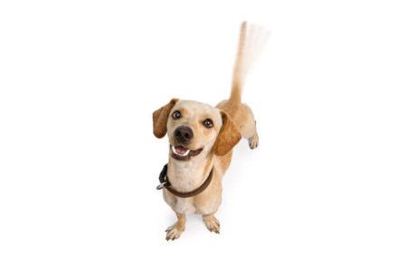 犬のしっぽを振る