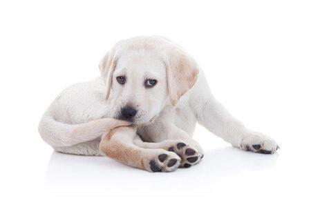 犬がしっぽを噛む理由