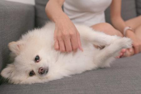 犬のしっぽを触ると嫌がられる理由