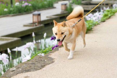 なぜ犬に散歩が必要