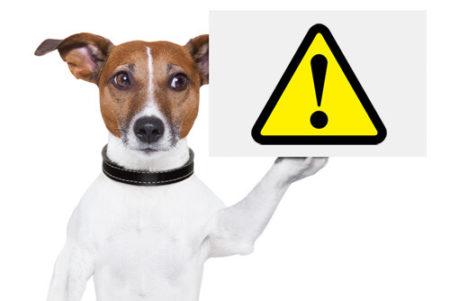 犬と一緒に電車移動する時の注意点