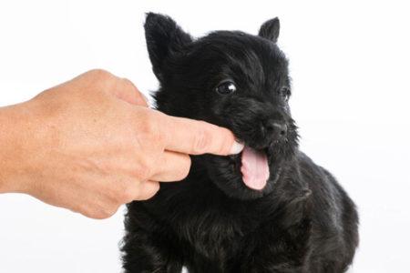 犬が甘噛みをする理由構ってほしい