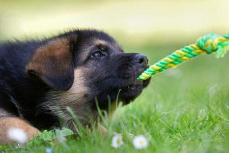 犬が飼い主と遊ぶ