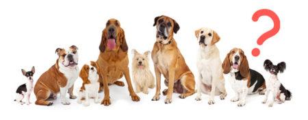 分離不安になりやすい犬種
