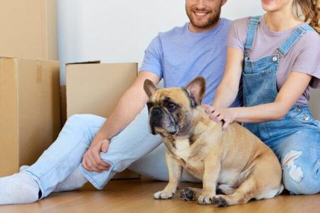 犬の分離不安の原因環境の変化
