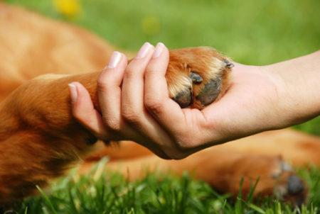 犬の肉球から枝豆の匂い